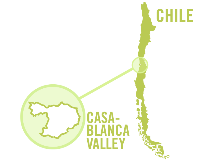 chile casablanca valley white 0001.png