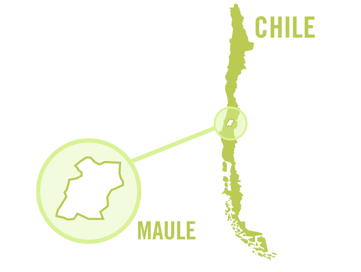 chile maule white 0001.png
