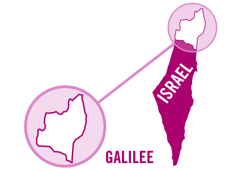 israel galilee rose 0001.png