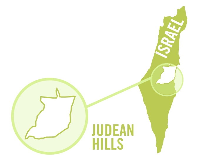 israel judean hills white 0001.png