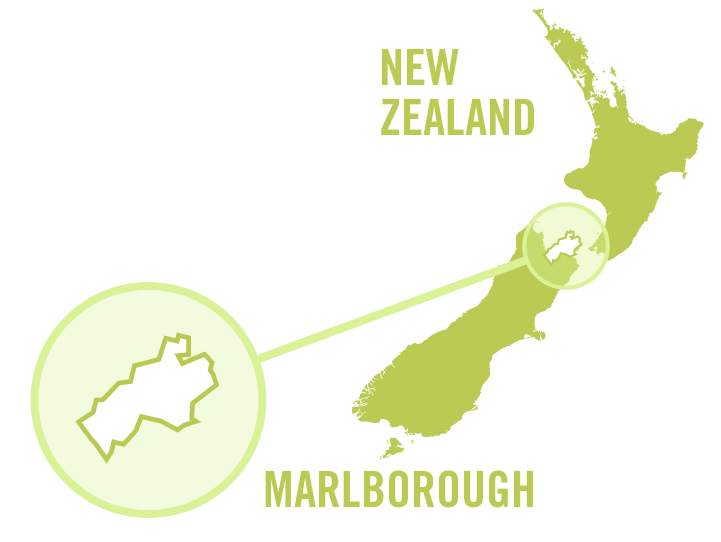 newzealand marlborough white 0001.png