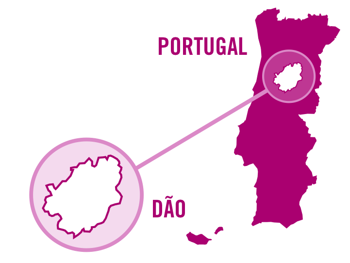 portugal dao rose 0001.png
