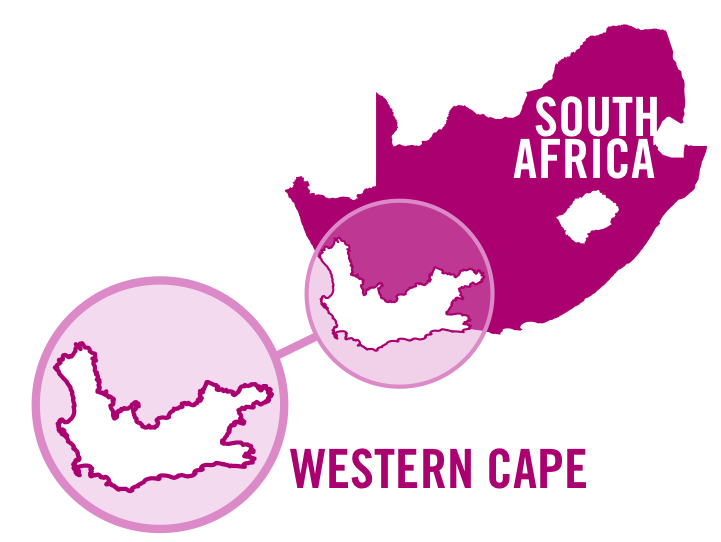 south africa western cape rose 0001.png